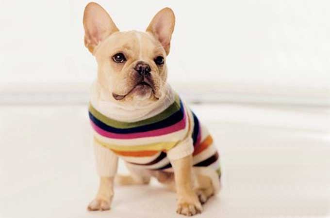 Fido would look fab in the Legacy Stripe dog sweater from Coach.